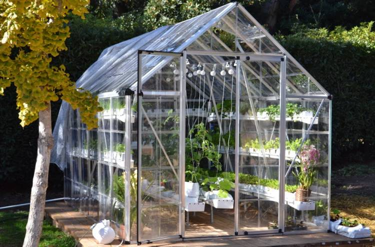 Still Quarantine At Home? Try Vegetable Gardening on the Home Yard